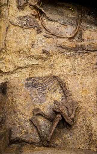 Découverte de la tombe d'un Celte dans les Ardennes (2)
