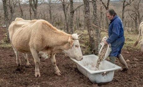 Autriche : les envahisseurs reçoivent plus d'avantages que les agriculteurs retraités