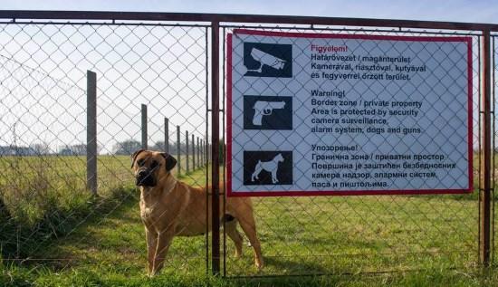 Hongrie : clôture et « détention » pour maîtriser les flux d'envahisseurs