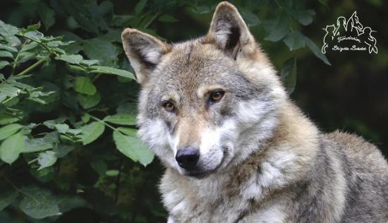 Un préfet qui veut exterminer l'unique spécimen d'une espèce strictement protégée